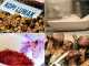 8 món ăn giá đắt đỏ trên thế giới có nhiều ở Việt Nam