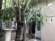 Chuyện về căn nhà ở Sài Gòn có 9 người chết bí ẩn