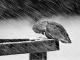Gặp sóng gió đừng cúi đầu bởi đường đời càng chông gai, kết quả càng tốt đẹp