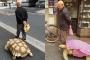 Người đàn ông dắt rùa khổng lồ đi dạo khắp Tokyo