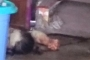 Vụ 3 mẹ con chết bất thường: Chị Nguyên bị đâm 8 nhát vào bụng