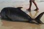 Cá tầng đáy ào ạt dạt vào bờ biển Huế
