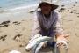 Chuyên gia Nga nói về nguyên nhân cá chết hàng loạt ở miền Trung
