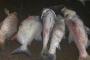 Hà Nội điều tra nguyên nhân cá chết tại hồ Linh Đàm