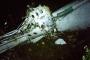 Hình ảnh từ hiện trường vụ máy bay chở đội bóng Brazil rơi ở Colombia
