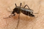 Ghi nhận 94 ca nhiễm Virus Zika tại TP HCM