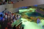 Lạc bước vào 7 thủy cung đẹp nhất nước Mỹ