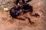 Nữ sinh Quảng Nam đánh nhau trên vũng bùn