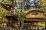 Văn phòng trên cây 'cổ tích' của Microsoft: Chốn làm việc đáng mơ ước nhất thế giới