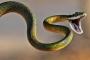 Nằm mơ thấy rắn là điềm gì và hóa giải như thế nào?