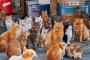 10 điểm đến mà tất cả những người yêu mèo muốn 'xách ba lô lên và đi' ngay lập tức