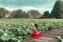 Ninh Bình sau dịch Covid-19: Đầm sen Hang Múa là điểm nhấn thu hút khách du lịch