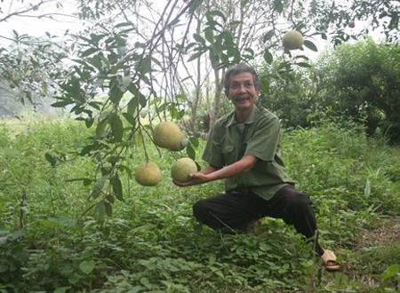Ông Trần Quang Khải đãi khách bằng những quả bưởi ngon nhất có trong vườn