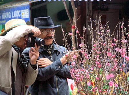 Hoa đào đem không khí Tết đến mọi nhà
