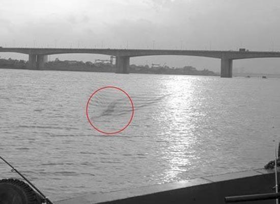 Bức ảnh được cho là thủy quái sông Hồng (Ảnh: http://vozforums.com)