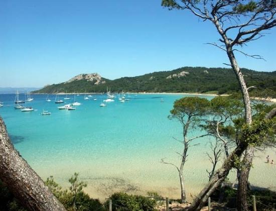 Biển xanh như ngọc và những hàng thông và bạch đàn tỏa hương thơm tự nhiên