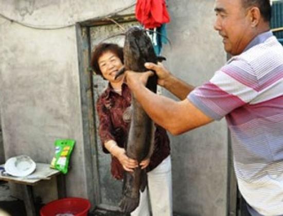 Con cá trê bí ẩn xuất hiện trong nhà ông bà Xu Xianmin