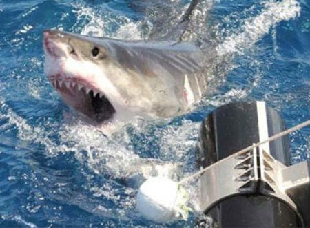 Hy hữu thoát chết ngờ cá mập dẫn đường (Ảnh minh họa).