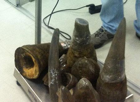 16,5 kg sừng tê giác