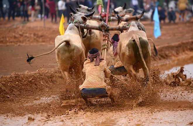Hàng nghìn người Hà Nội hò reo cổ vũ đua bò | Lễ hội đua bò, Bảy Núi, Hà Nội, Làng văn hóa các dân tộc Việt Nam, Lễ hội Việt Nam, Lễ hội dân gian