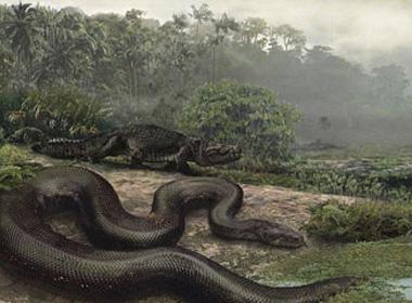 Loài rắn khổng lồ trong quá khứ sẽ quay lại vì sự nóng lên toàn cầu