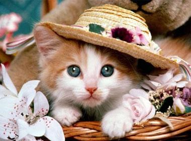 Được yêu mến bởi tính cách nền nã, nhẫn nại, tuổi Mèo tạo cho đối phương cảm giác tin cậy