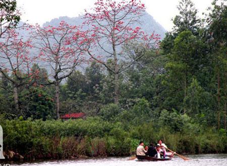 Hoa gạo nở đỏ bên sông