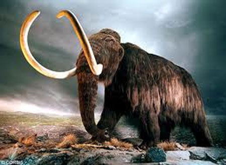 Có thể hồi sinh loài voi ma mút đã tuyệt chủng?
