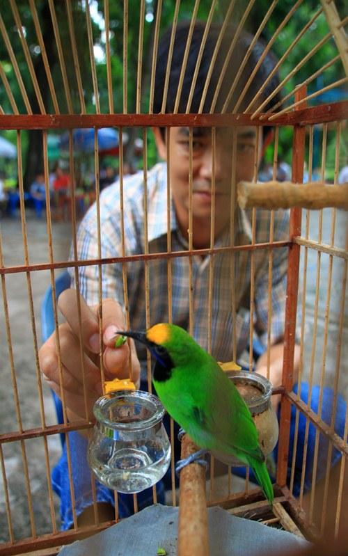 Người Sài Gòn rủ nhau ra công viên đọ... chim quý | Chim cảnh, Chim quý, TP.HCM, Sài Gòn, Thi chim, Thú chơi, Đại gia, Động vật quý hiếm