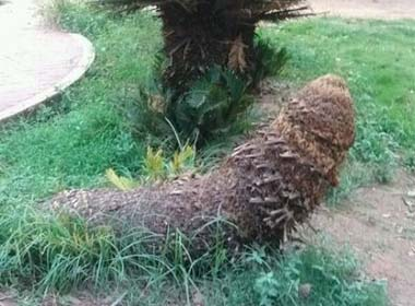 Thân cây có hình thù kỳ lạ.