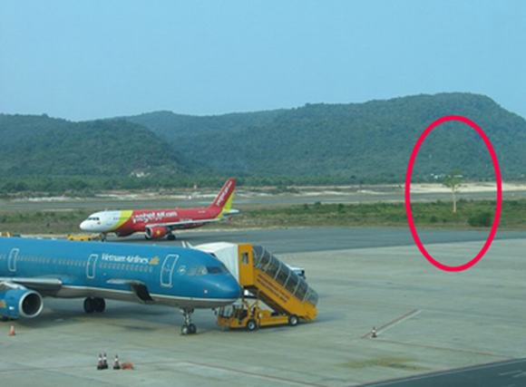 Bí ẩn xung quanh việc 'cây ma' bị cô gái trẻ nhập hồn ở sân bay Phú Quốc