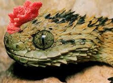 Bóc mẽ 'thần rắn có mào' ngụ ở cổ miếu
