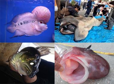 Phát hiện những loài cá có hình dáng kỳ lạ nhất thế giới