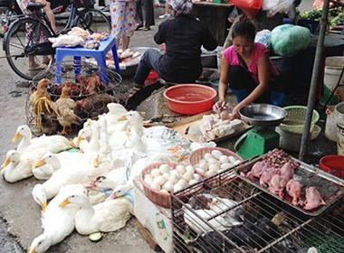 Cúm gia cầm H5N6 cực độc đe dọa ở Việt Nam
