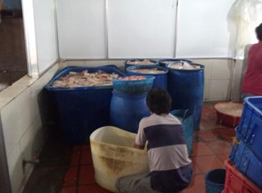 Rùng mình cơ sở sản xuất thức ăn gia súc chế biến thực phẩm cho người