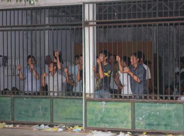 Khởi tố vụ đánh bạc dưới hình thức đá gà ở Nghệ An