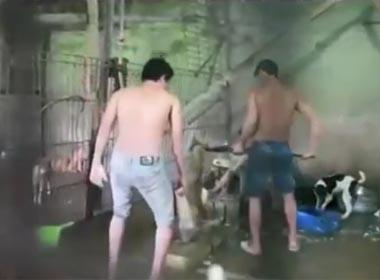 Clip chó bị nhồi tàn bạo trước khi bán để làm thịt