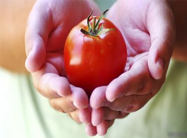 Cà chua có thể phòng chống ung thư tuyến tiền liệt ở nam giới