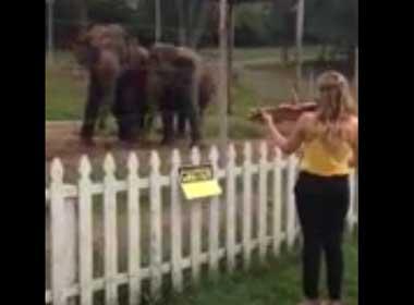 Video voi nhảy theo tiếng đàn violin
