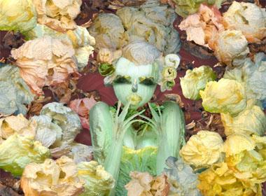 Những bức hình đẹp khó tin từ 'rau bắp cải'