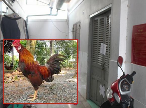 Bi hài những vụ thảm án chỉ vì... một con gà