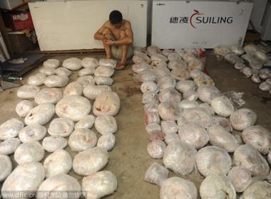 Phát hiện và thu giữ 457 con tê tê chết