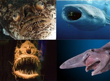 Những sinh vật có ngoại hình xấu xí ở dưới biển sâu