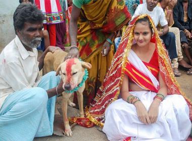 Những đám cưới giữa người và động vật kỳ lạ