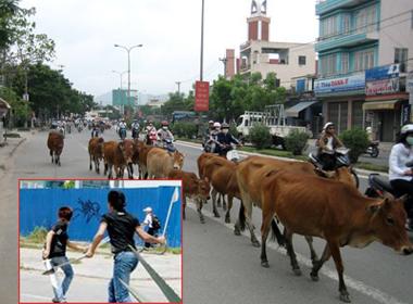 2 lái đò truy sát đẫm máu vì tranh nhau suất... đưa bò