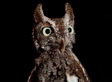 Những động vật ăn đêm và di chuyển không tiếng động