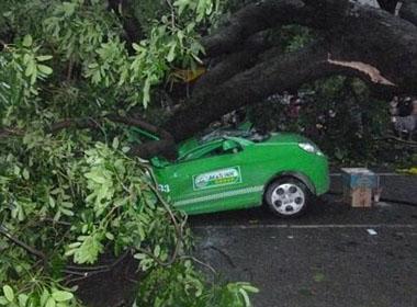 Những tai nạn thương tâm do mưa bão