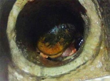 Giải cứu bé sơ sinh mắc kẹt trong ống thoát nước