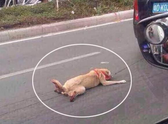 Chú chó bị chủ nhẫn tâm kéo lê trên đường đến chết khiến dân mạng phẫn nộ