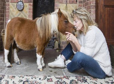 Chú ngựa chỉ cao 0.5m có sở thích đặc biệt